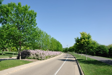 mediaan: Een residentiële straat met een aangelegd Median