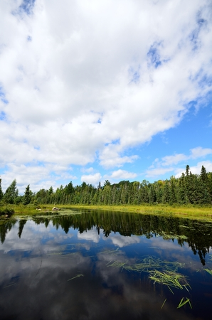 cedars: Reflections of Clouds on a Wilderness River Stock Photo