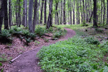 hardwoods: Trail Through the Forest In the Summer Stock Photo