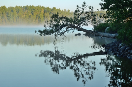 cedars: Reflections of a Leaning Pine Tree on a Foggy Wilderness Lake Stock Photo