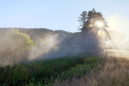 crepuscular: Crepuscular Rays Through the Fog Near the Rice Creek North Regional Trail in Shoreview, Minnesota