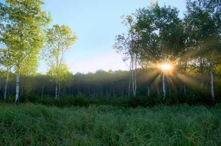crepuscular: Dramatic Crepuscular Rays in the Foggy Aspen Meadow by the Rice Creek North Regional Trail in Shoreview, Minnesota