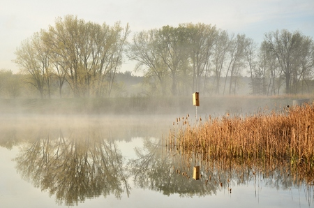 regional: Monring Reflections on a Calm Pond by the Rice Creek North Regional Trail in Shoreview, Minnesota