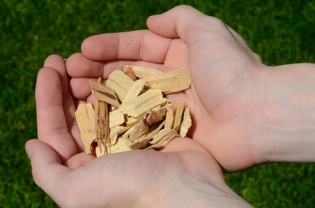 barbecuing: Hands Holding Hickory Wood Chips For Barbecuing