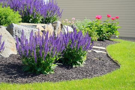 Salvia Flowers and Rock keermuur bij een woonhuis