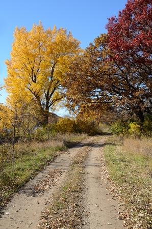 晴れた日に砂利農村道路に沿って紅葉