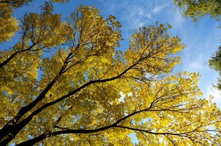 晴れた秋の日にカラフルな灰葉 写真素材