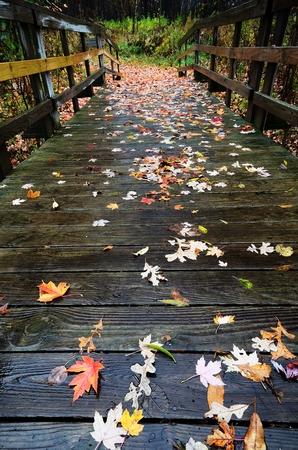 カラフルな落ちたもみじ葉の秋木製足橋の上