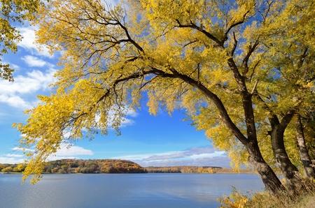晴れた秋の日に湖でカラフルなツリー 写真素材