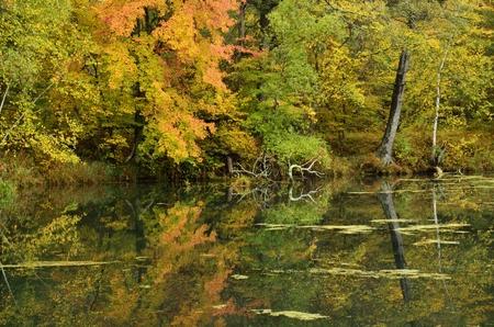 紅葉を湖畔に穏やかな日に反映されます。