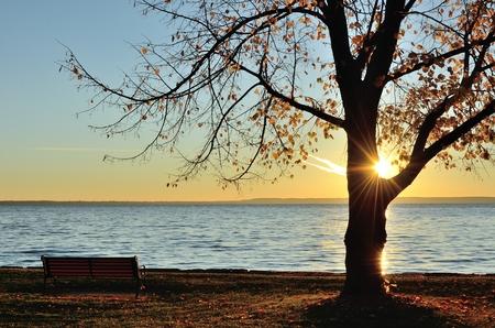 後半に単一の木を通して輝く太陽秋の朝