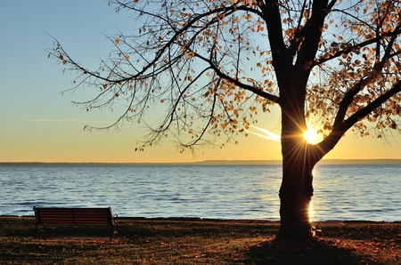 The Sun Shining Through a Single Tree on a Late Fall Morning