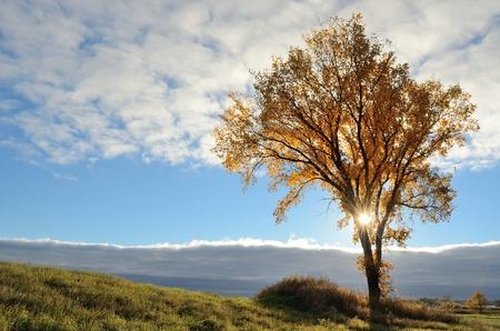 秋の朝に一本の木を通して輝く太陽