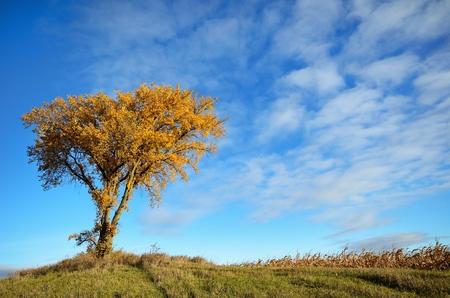 秋の朝に単一のツリーで朝照り