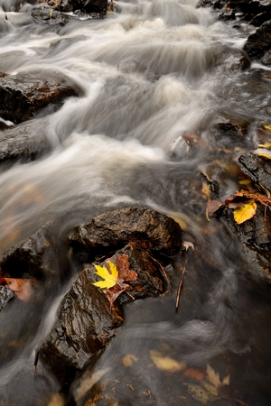 Autumn Leaves and Flowing Rapids of a Stream Banco de Imagens