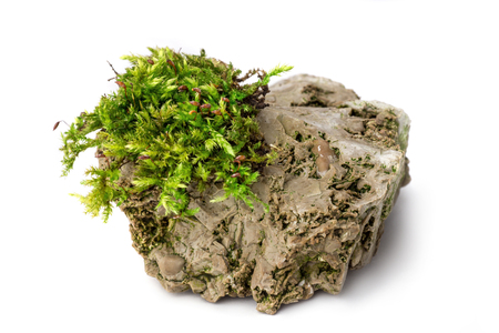 Moss and rock on white background isolated Imagens