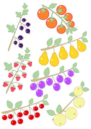 black currants: Raspberries, black currants, tomatoes, plums, apples, cherries and pears Stock Photo
