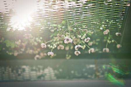 秋の午後の花に反射する太陽の光 写真素材