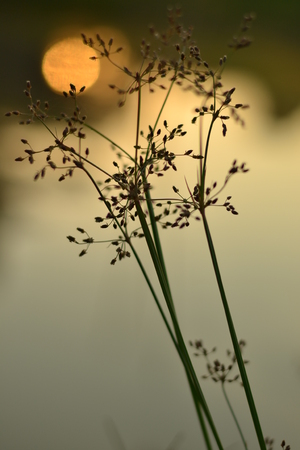 plant with bokeh background