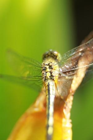 dragonfly Stock Photo - 18591276