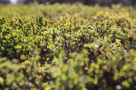 Bush Stock Photo - 9568878