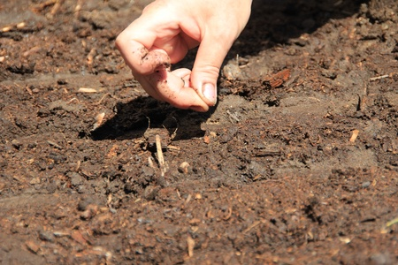 Woman Plants seeds in the garden Stock Photo - 9613066