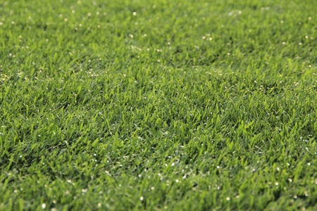 Background of green grass  photo