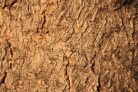 Tree bark  Stock Photo - 9807302