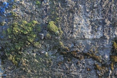 Moss on stone photo