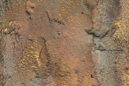 Surface with calciferous growths, background photo