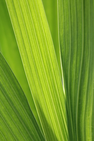 young leaf: Hojas verdes de cerca