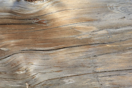oak wood: The texture of an old tree