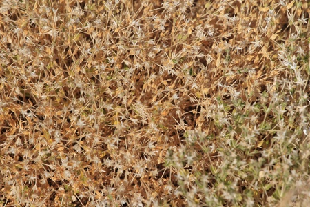 Dry plant in the desert close up photo