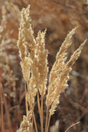 dried up: Wild plants