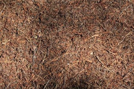 ameisenhaufen: Ameisenhaufen hautnah