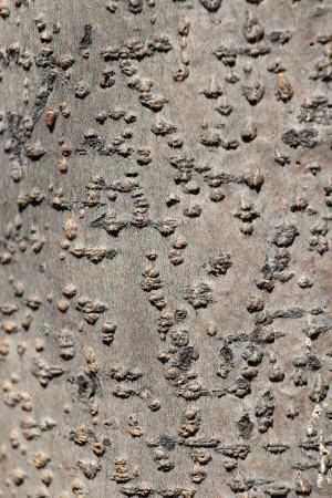 texture of tree bark Stock Photo