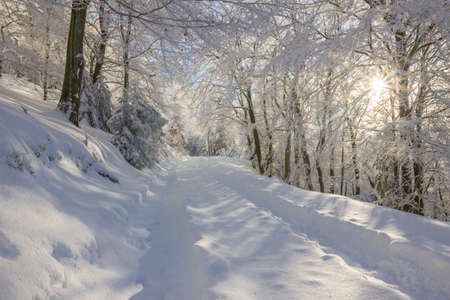 A hiking trail in the snow-covered forest.