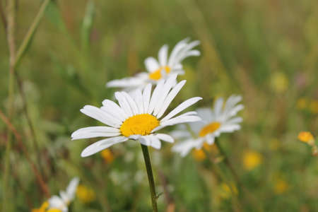 A white yellow flower photo