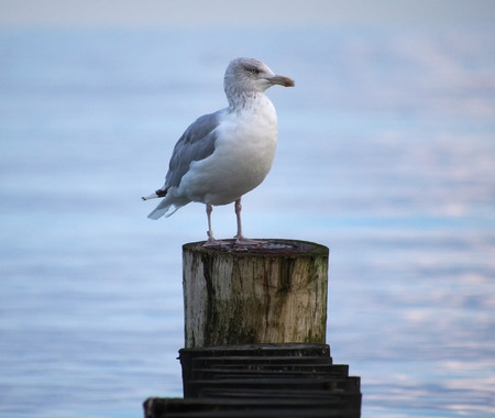A seagull on a jetty Фото со стока