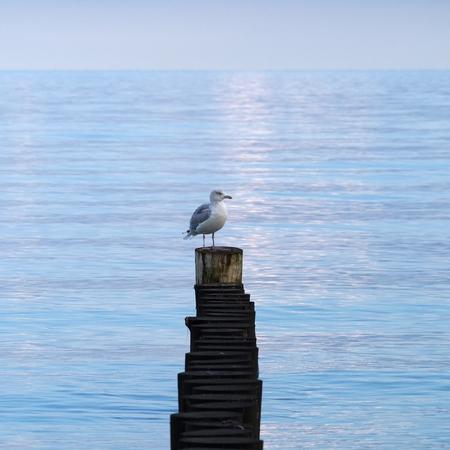 Seagull on a wavebreaker