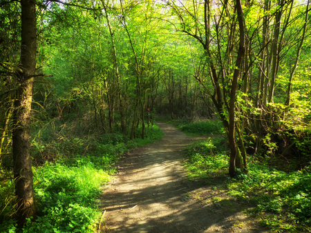 Hiking trail in the forest between Ratingen and Kettwig in Germany 스톡 콘텐츠