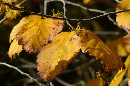 Autumn leaves on a branch in the forest