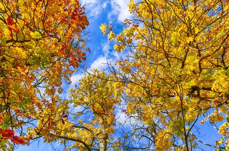 Colorful autumn leaves under a blue sky 스톡 콘텐츠