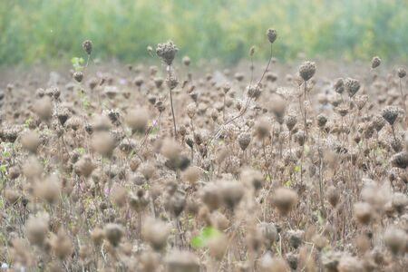 A withered field of flowers in autumn