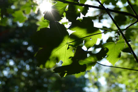 Leaves in the forest and sunbeams