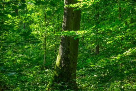 Tree and green leaves in the forest