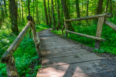 Hiking trail in the Eller forest near Duesseldorf