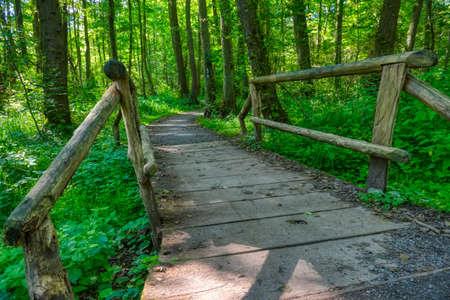 Hiking trail in the Eller forest near Duesseldorf Stok Fotoğraf - 151355909