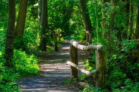 Seven bridges in the Eller forest near Duesseldorf Stok Fotoğraf