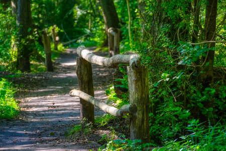 Bridges trail in the Eller forest near Duesseldorf Stok Fotoğraf